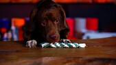 Köpek Oyuncağı