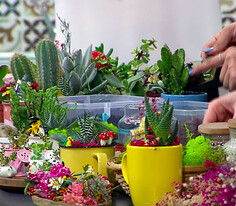Minyatür Bahçe Yapımı