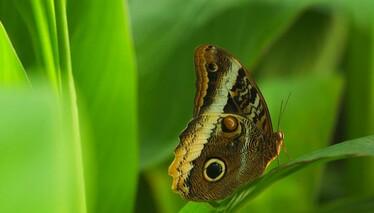 Kelebekler Vadisi Konya