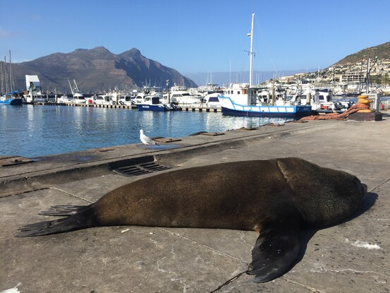 Güney Afrika Cape Town Foto Galeri