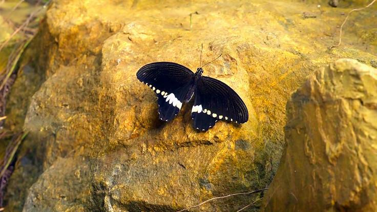 Kelebeklerin Renkli Dünyası